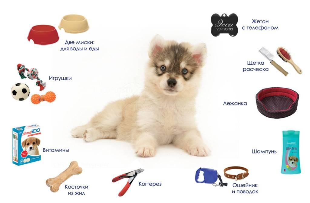 Какую собаку завести в квартире - обзор 10 лучших пород