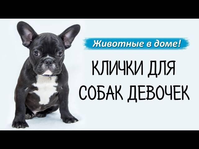 Модные и гламурные клички для собак, красивые имена для мальчиков и девочек.