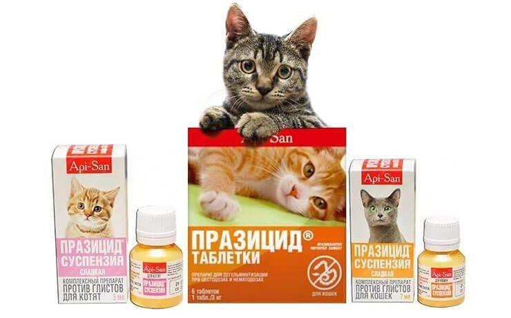Глисты у котят – симптомы, признаки, методы лечения