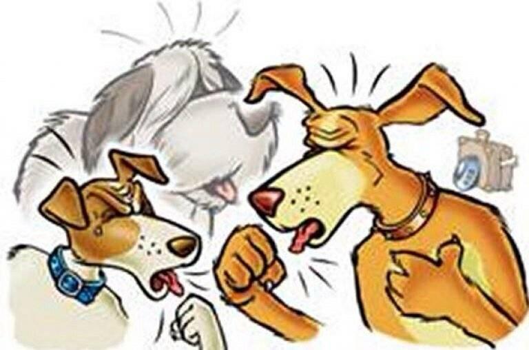 Собака кашляет как будто подавилась - причины, лечение