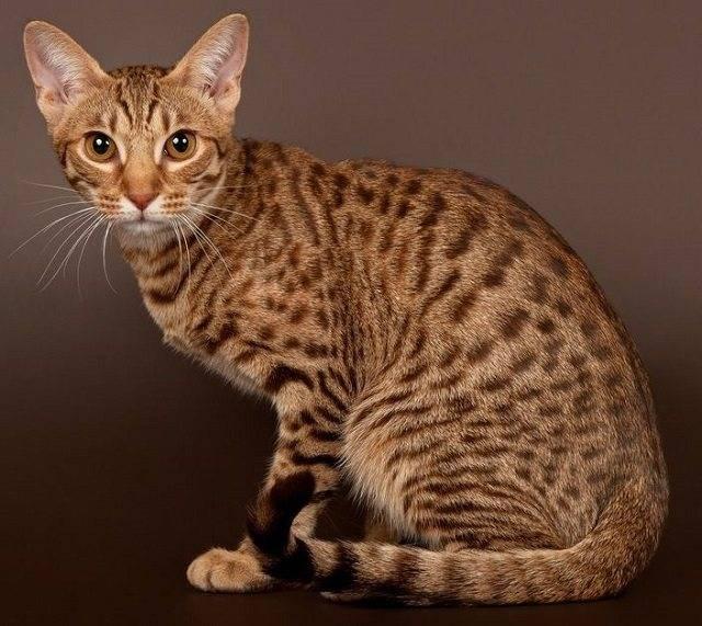 Повадки и характер кошек и котов