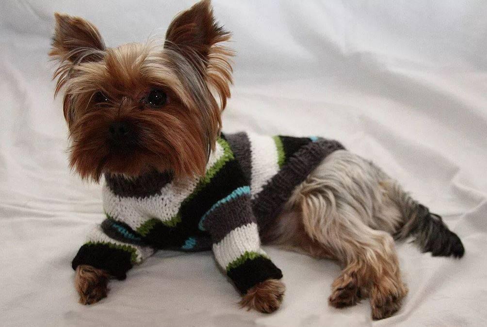 Как самому связать одежду для собаки своими руками по готовым схемам