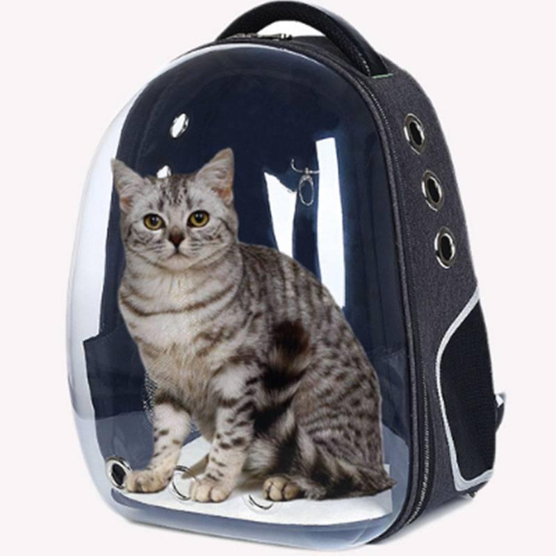 Примеры переносок для котов: рюкзаки, сумки, портфели и другие виды
