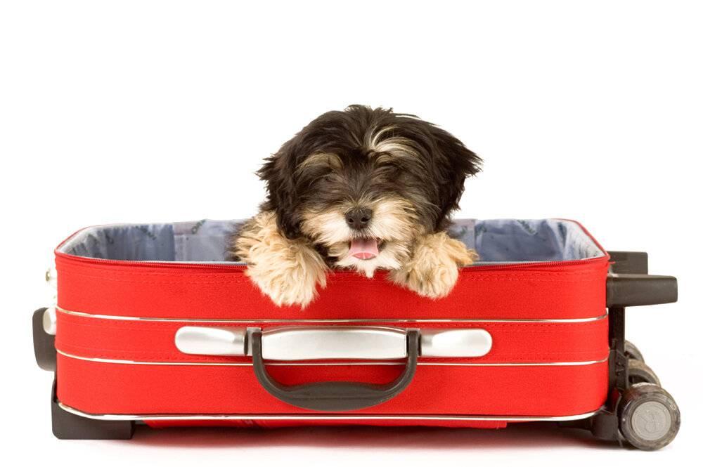 Гостиница для собак в москве с низкими ценами и хорошими отзывами - petwish