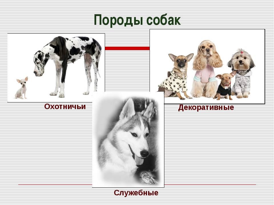 Подружейные собаки | уральский следопыт