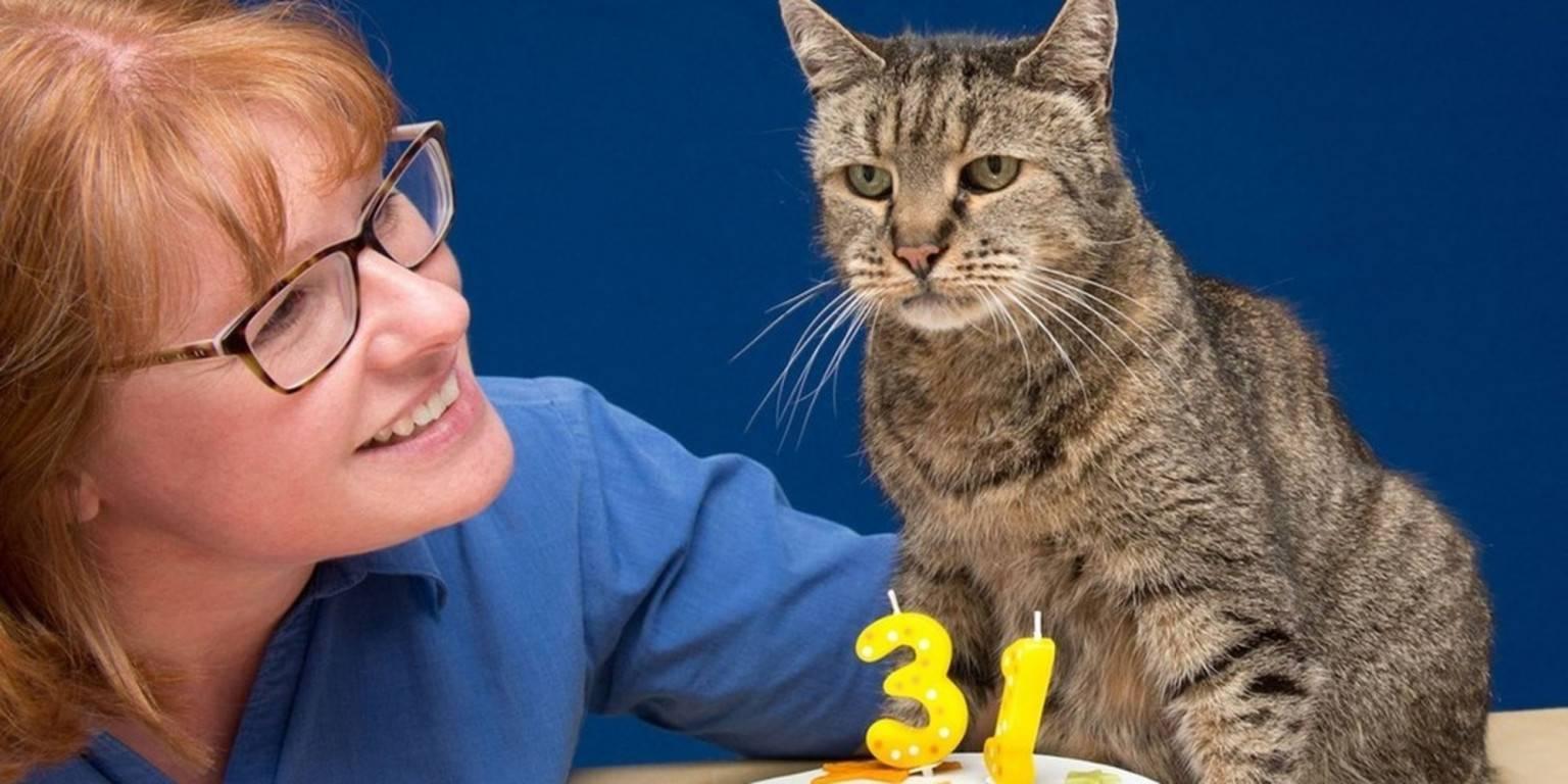 Коты и кошки – долгожители: сколько прожили самые старые питомцы в мире, к каким породам они принадлежали?