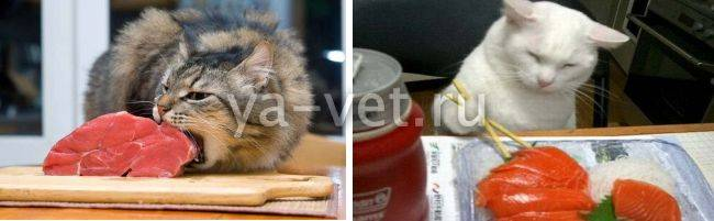 Гастрит у кошек (уремический) - симптомы и методы лечения