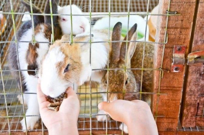 Как содержать кроликов зимой на улице?