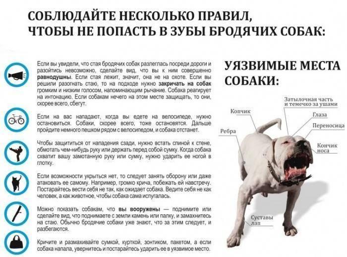 Как защититься от собак на улице (или от стаи собак): практические рекомендации