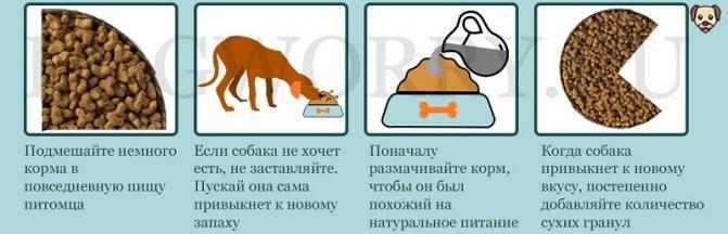 Почему кота рвёт от сухого корма и что делать владельцу