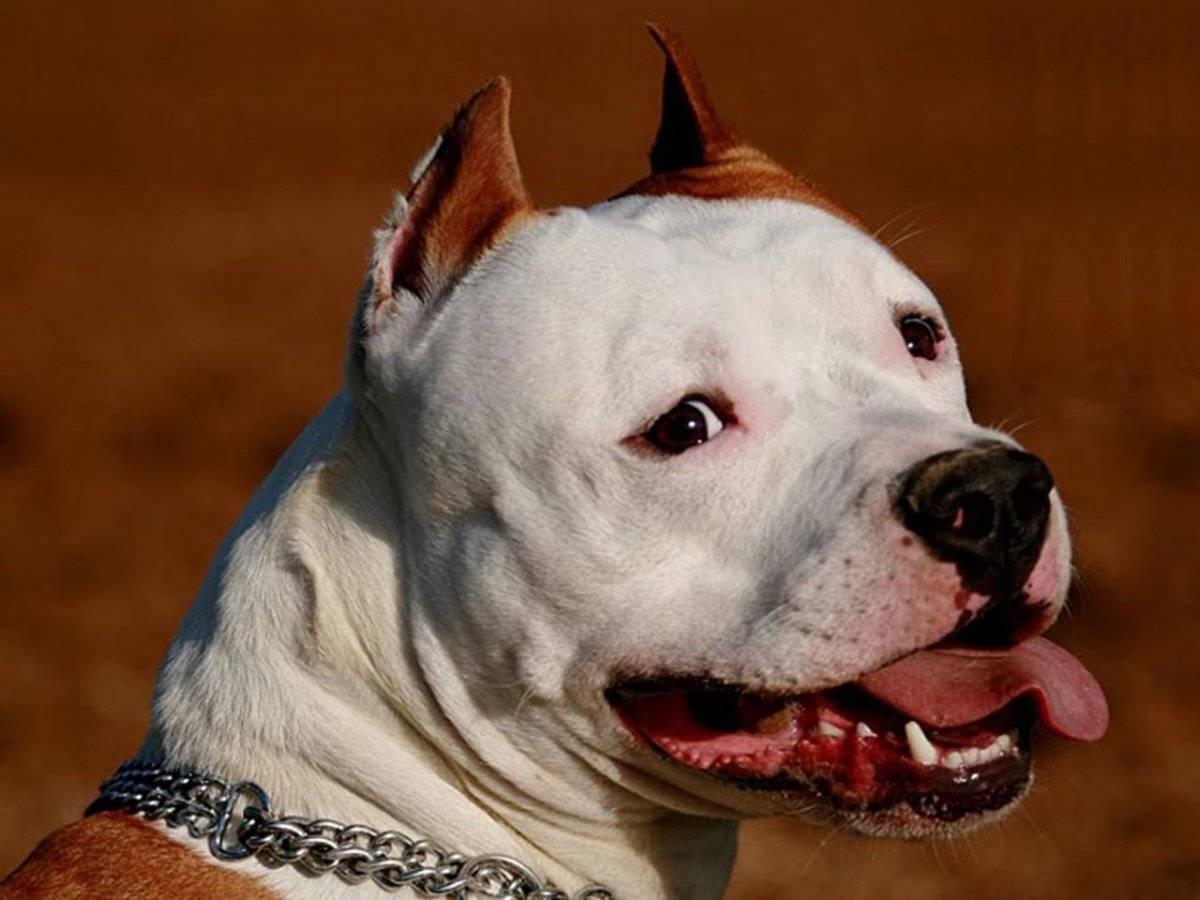 У какой собаки самый сильный укус и челюсть