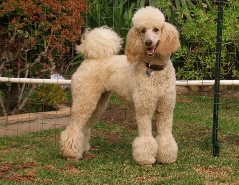 Топ-10 самых пушистых собак в мире