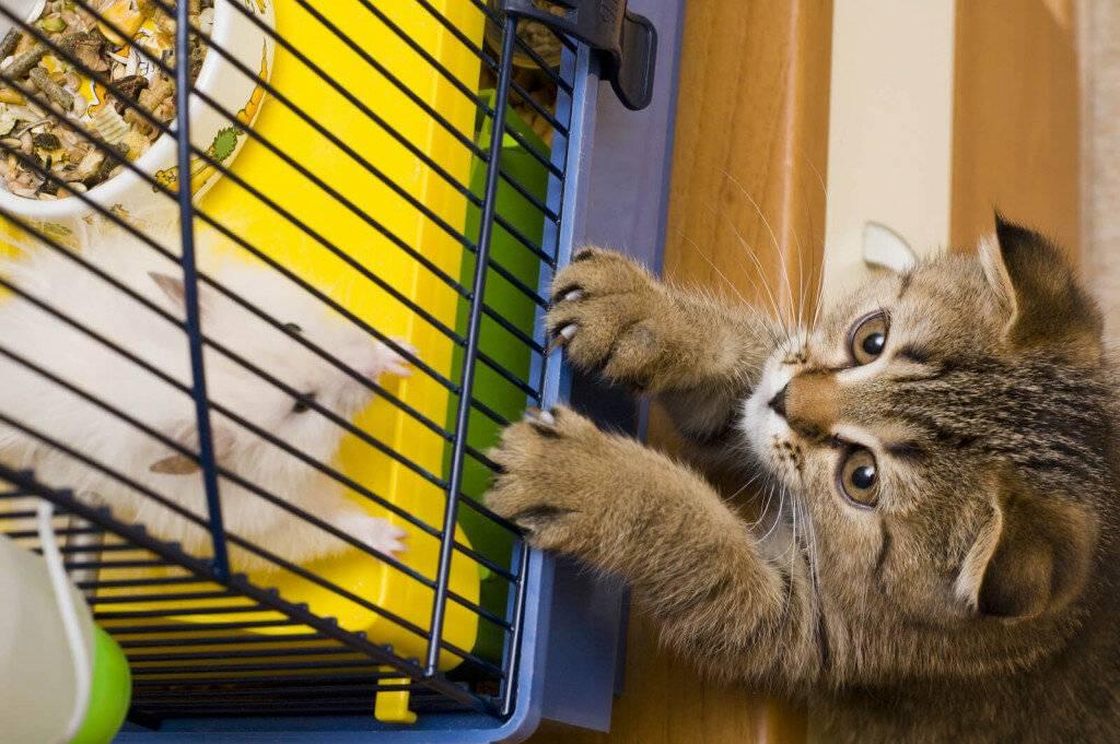 Что делают коты, когда нас нет дома: топ-10