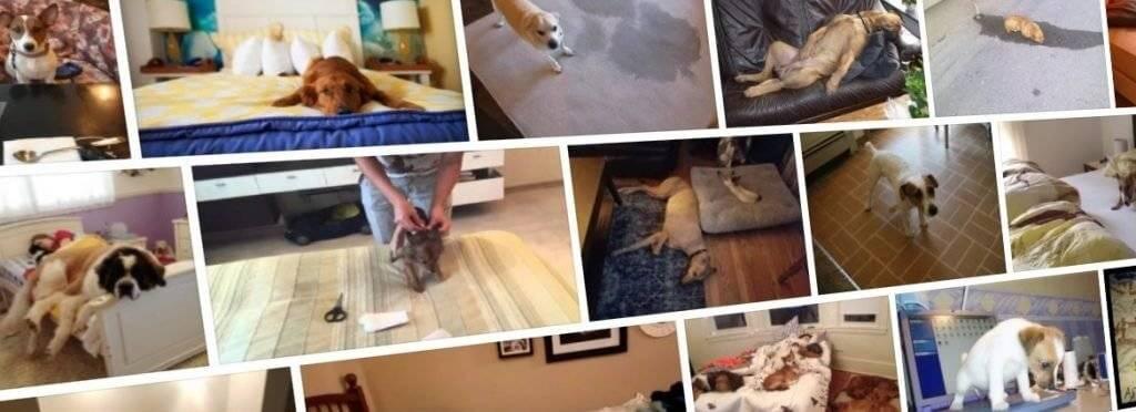 Как отучить собаку гадить в неположенном месте: совет специалиста