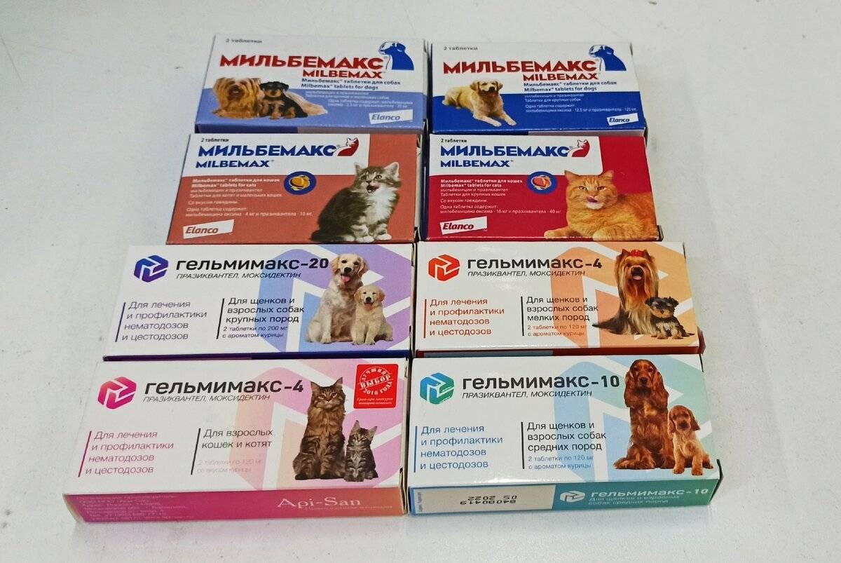 Капли от глистов на холку для кошек: популярные препараты