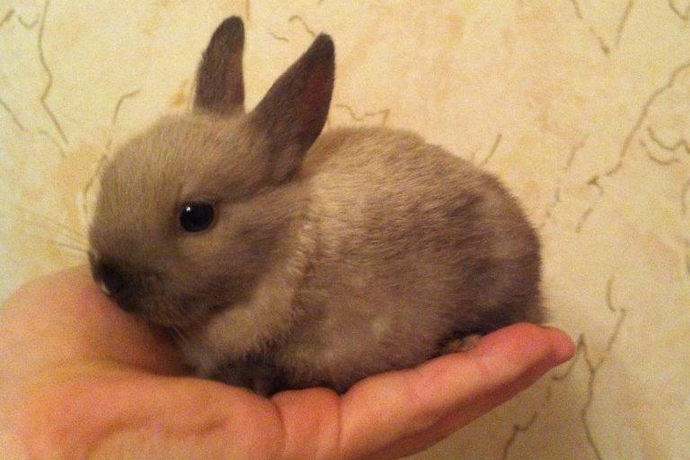 Как назвать кролика: советы по выбору клички для мальчиков и девочек
