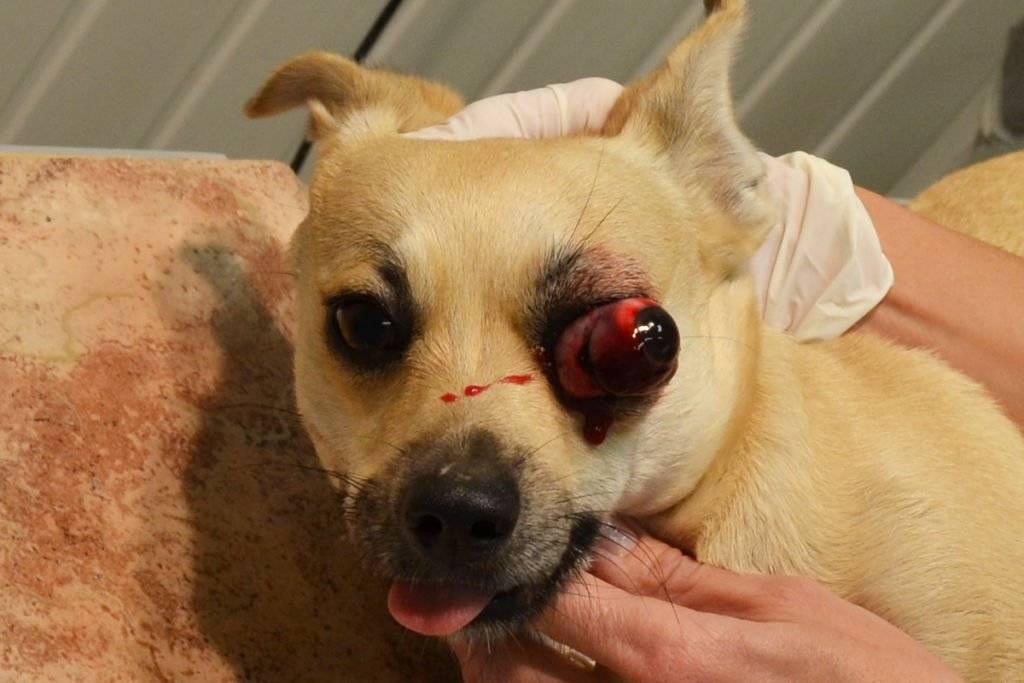 Собака с голубыми глазами: красивые породы