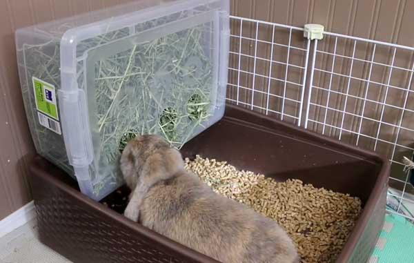 Как выбрать лоток для кролика и приучить его к туалету