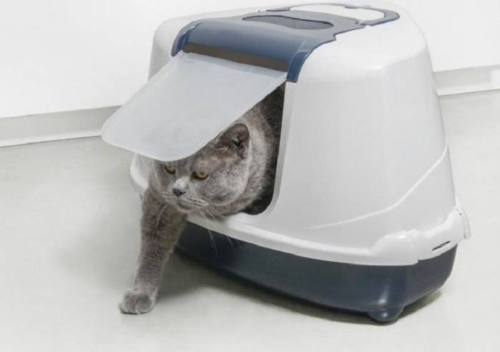 Туалет для кошек - закрытый лоток, или домик, особенности выбора и использования кошачьего туалета