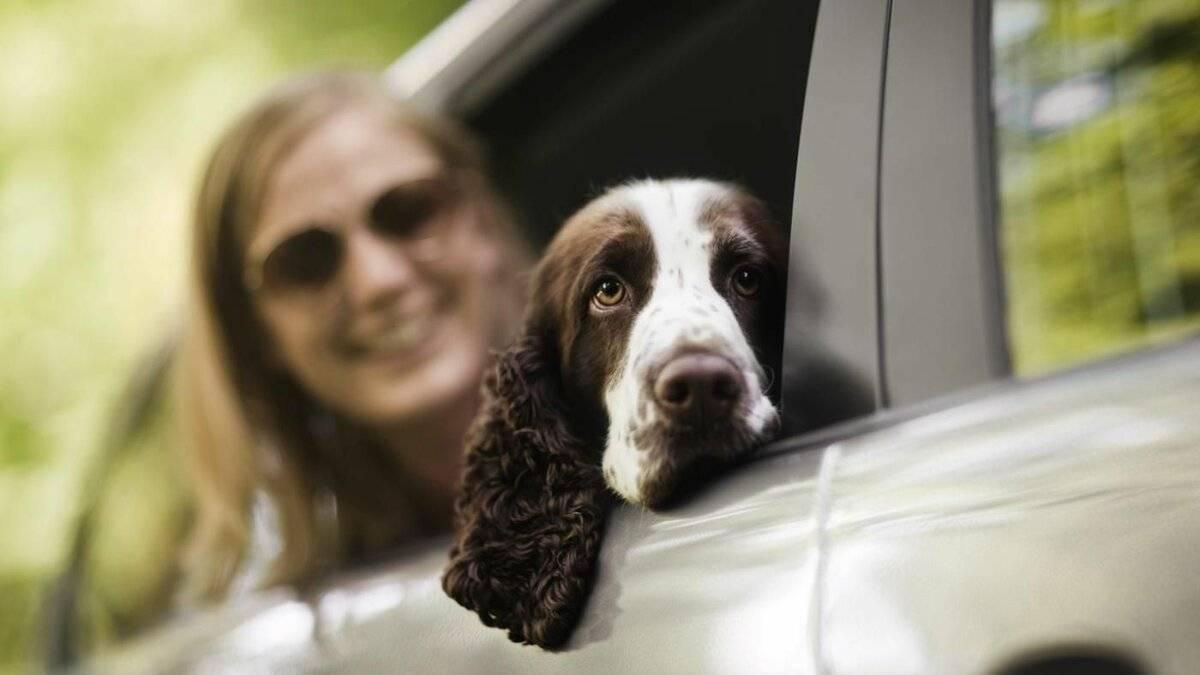 Почему взрослая собака боится гулять на улице, почему щенок боится гулять на улице, как помочь питомцу побороть страх