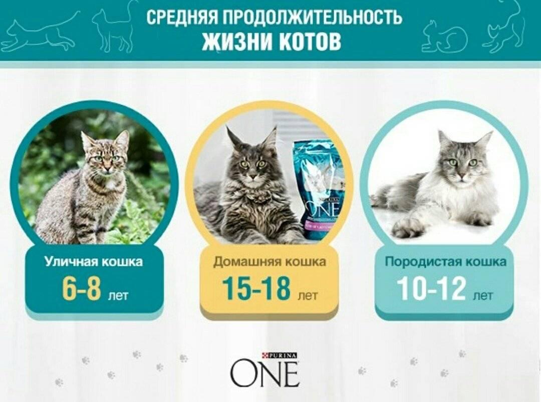 Объединяющее разнообразие беспородных котов