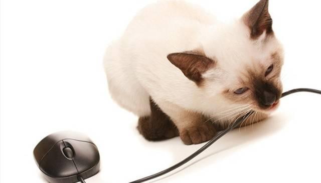 Как отучить кошку грызть провода и что делать если котенок грызет все подряд
