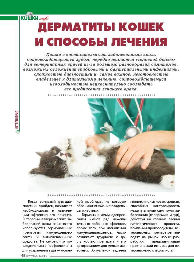 Гемобартонеллез у кошек и собак – основные причины и способы лечения