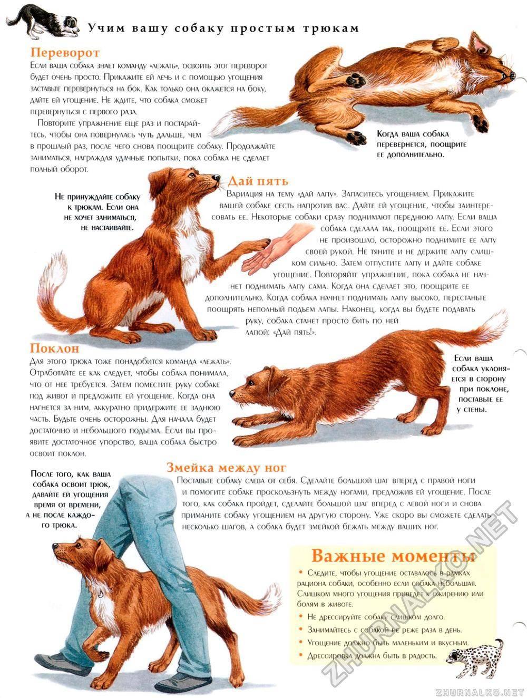 Пошаговое руководство по обучению собаки команде фас самостоятельно дома