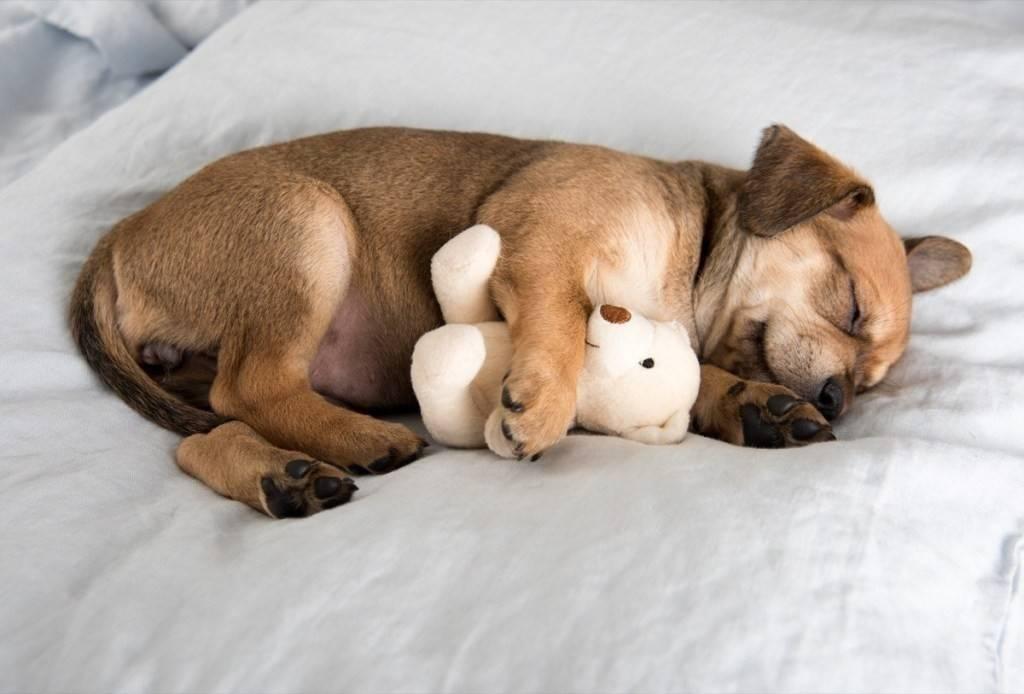 Как научить щенка в возрасте от одного до трех месяцев спокойно спать по ночам,зоопсихолог
