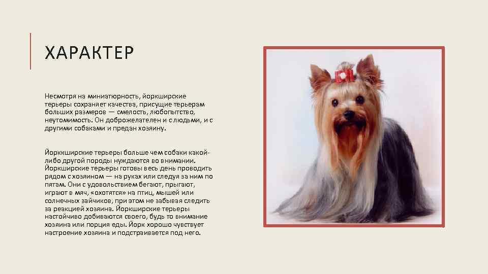 Как понять характер собак и выбрать идеального друга
