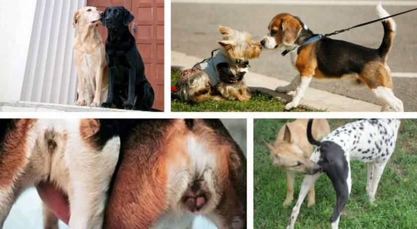 Собака пьет много воды и часто мочится – причины и лечение 2020