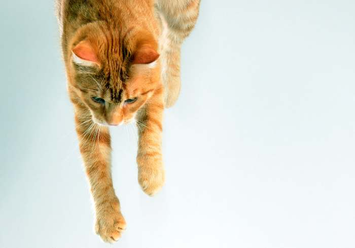 Кошка или кот упал с 5, 6, 7, 8, 9 этажа, что делать?