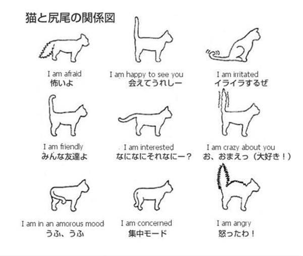 У кота сломан хвост: что делать