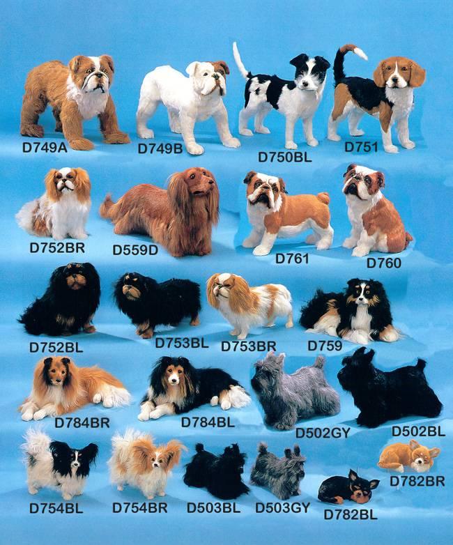 Средние породы собак — обзор с фотографиями и названиями