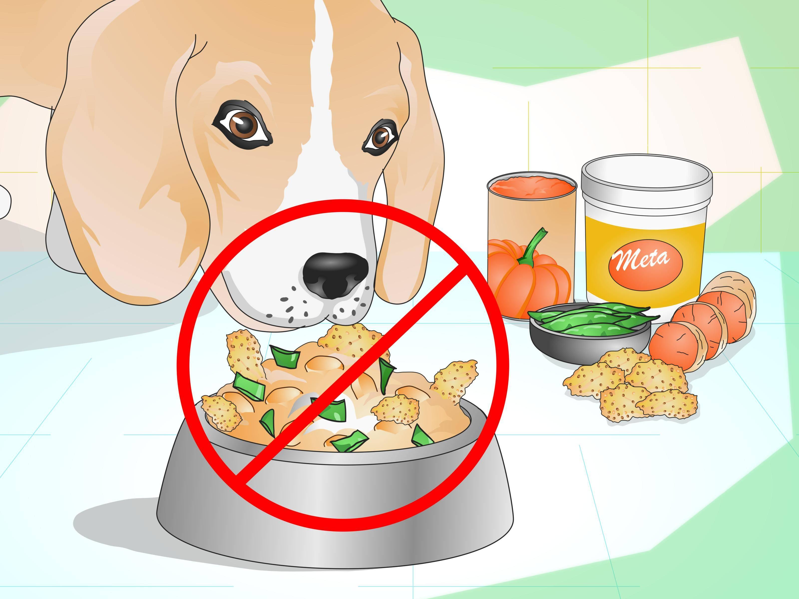 Можно ли давать свиные кости собаке: почему нельзя кормить взрослых и щенков вареными или сырыми ребрами, и что делать, если он съел их?