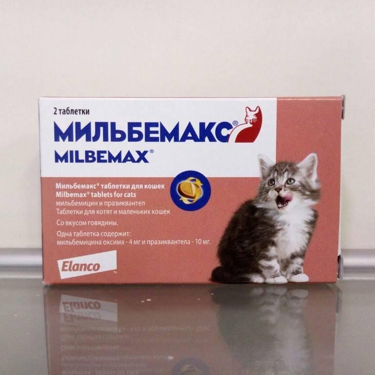 Мильбемакс для кошек: инструкция по применению