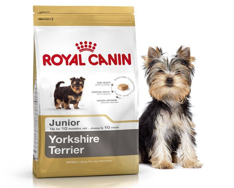 Рацион йоркширского терьера в домашних условиях: чем кормить щенка и взрослую собаку + как правильно выбрать корм