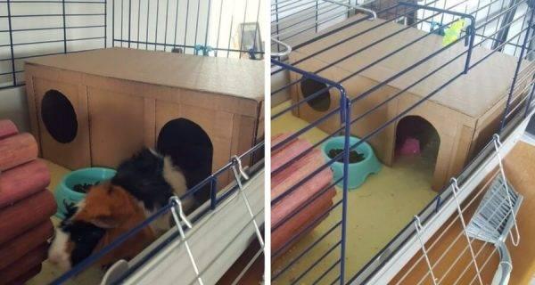 [новое исследование] инструкция по созданию гамака для морской свинки своими руками в домашних условиях (фото и видео)