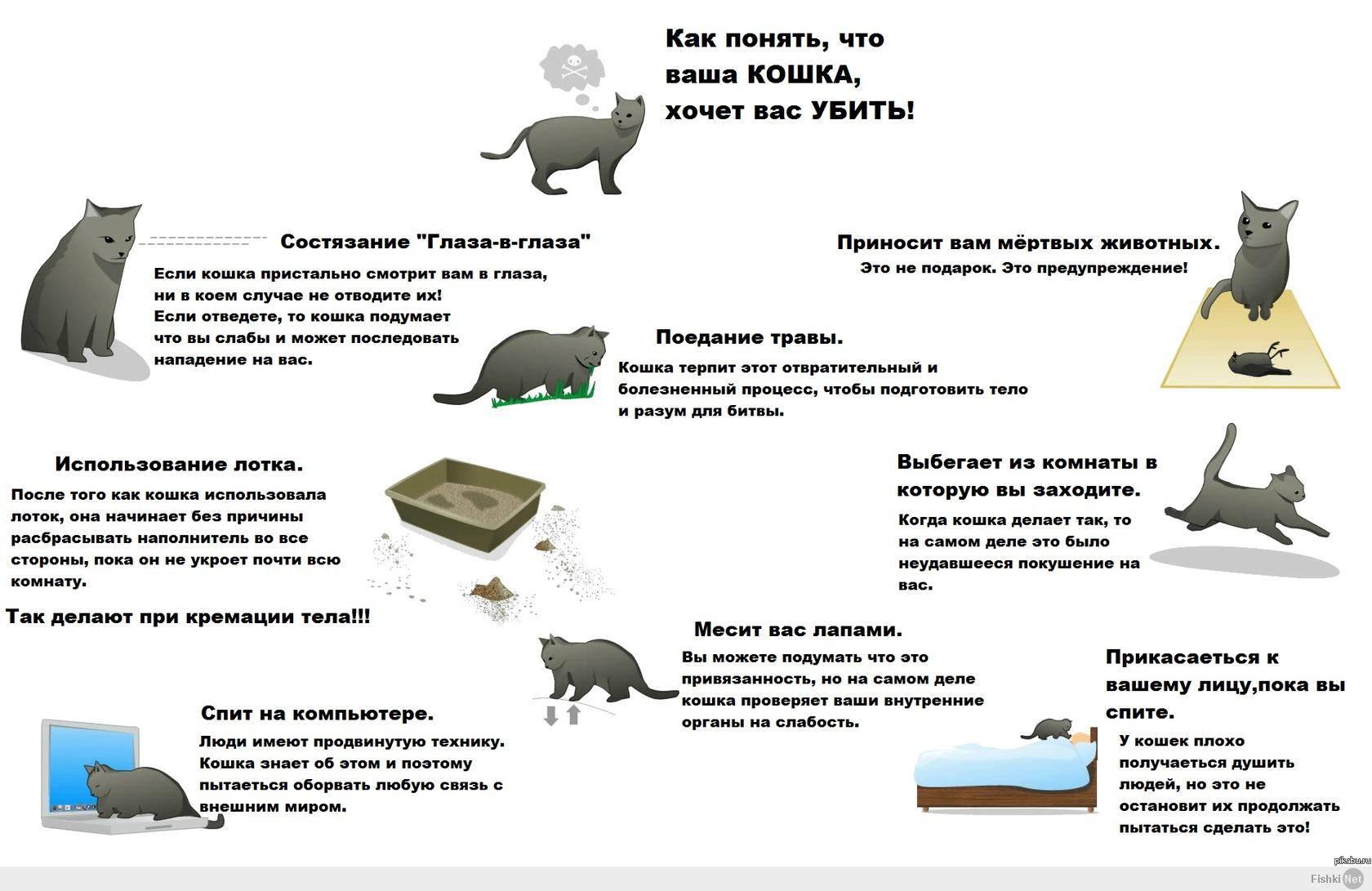 Поедание новорожденных котят кошкой: причины каннибализма у животных