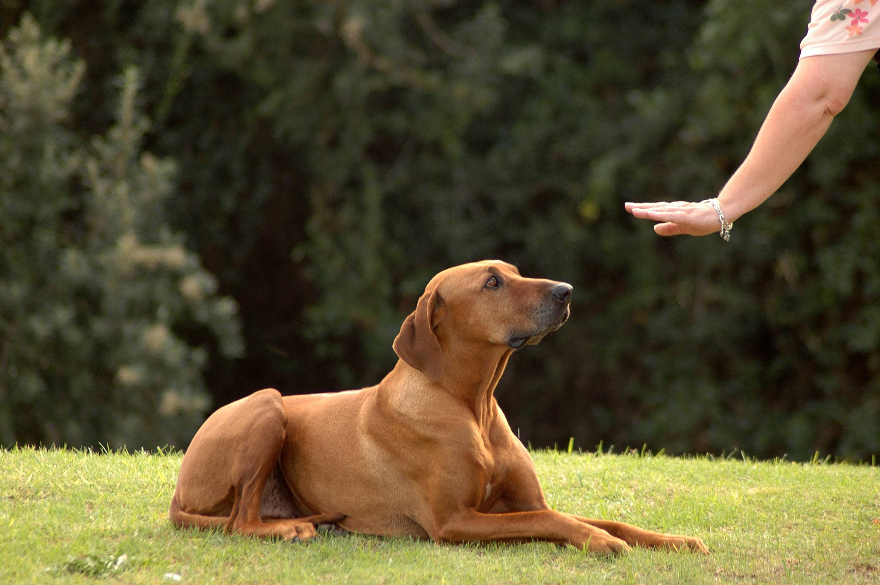 Простые споcобы научить собаку давать лапу