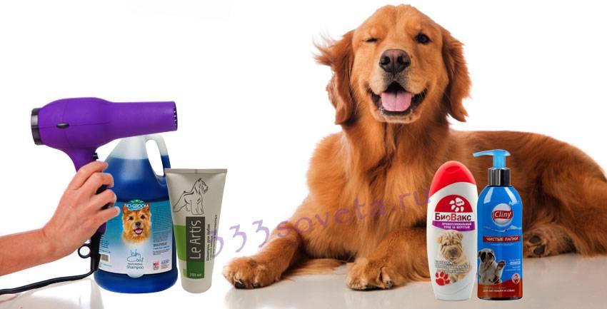 Как часто можно и нужно мыть собаку