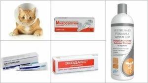 Лишай у кошек и котов: фото, признаки, симптомы и лечение в домашних условиях