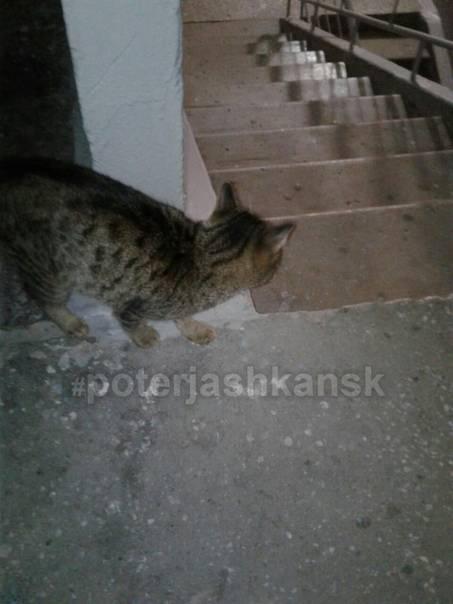 Как найти кота, кошку или котенка в квартире и на улице?