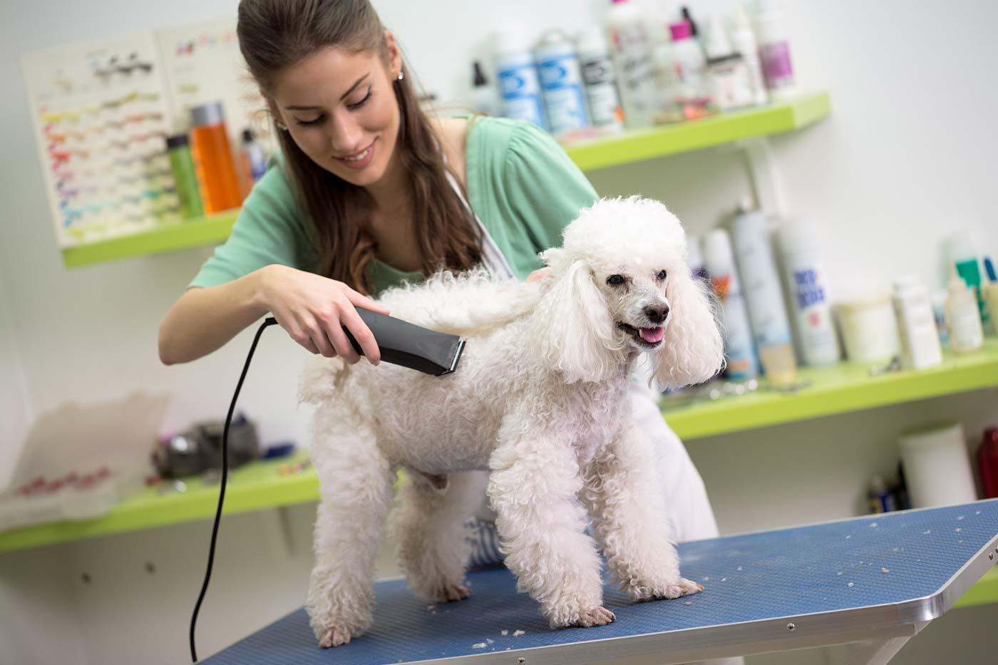 Профессия - грумер: мастер стрижек для кошек и собак рассказала о своей работе. профессия: как называется парикмахер для собак и кошек