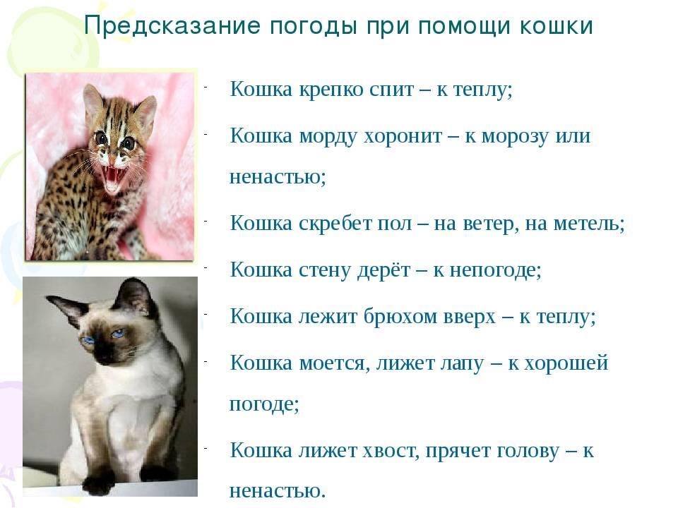 Почему кот или кошка уходят из дома и не возвращаются, что делать, как вернуть любимца: советы и приметы
