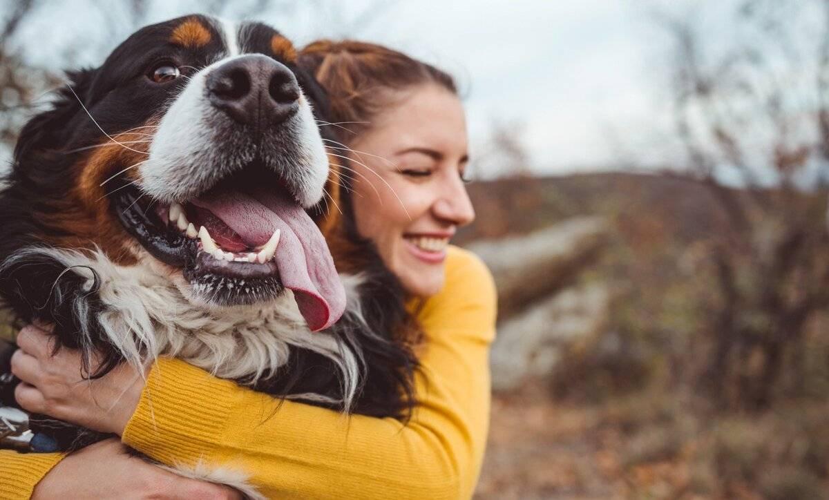 4 улыбки собаки   социум   наша психология