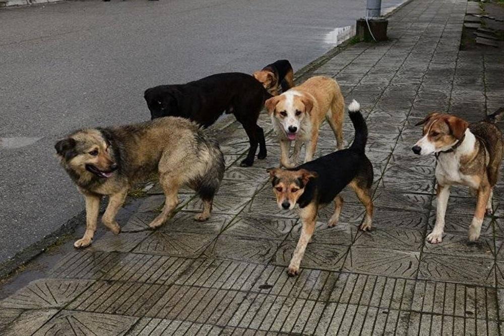 """Лают собаки во дворе, куда жаловаться и как от них избавиться? - юк """"лидер"""""""
