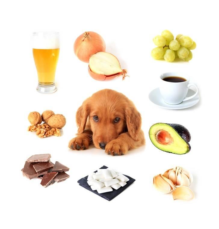 Какие овощи и фрукты можно давать собакам, а какие нельзя