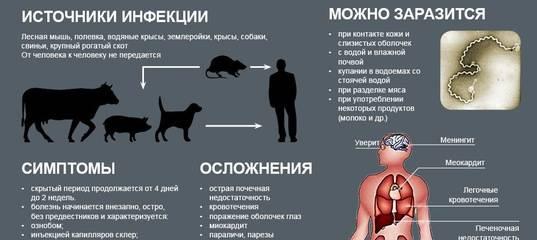 Коронавирус у кошек: симптомы и лечение короновирусной инфекции