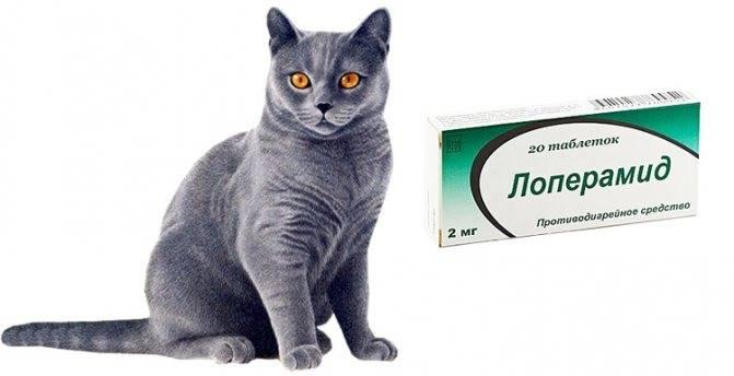 Таблетки для кошек от гуляния: 8 самых эффективных средств, уколы и капли, побочные действия и противопоказания